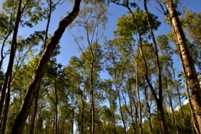 A brief history of our forests