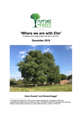 Elm report front cover